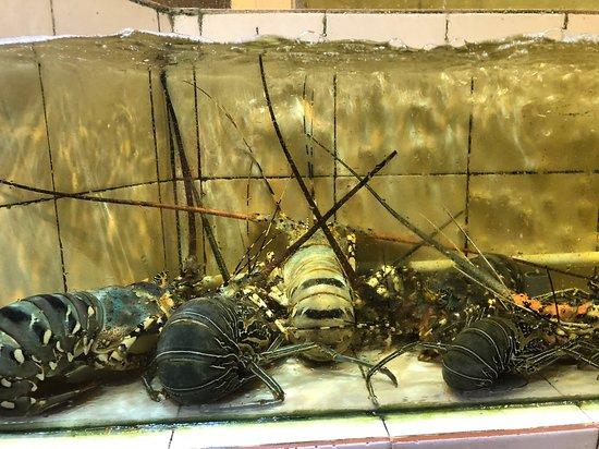 lobster in seafood aquarium